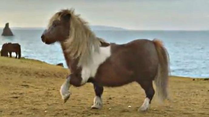 Pony baila como Michael Jackson