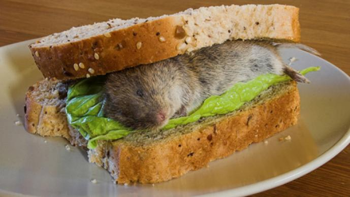Sandwich con ratón