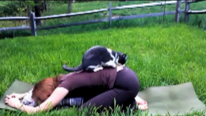 Mascotas interrumpen sesión de yoga
