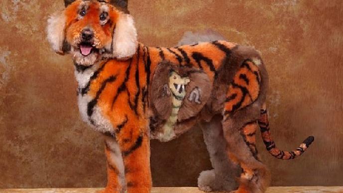 perros, extremo concurso, belleza