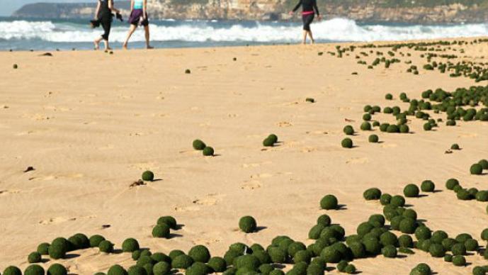 "Aparecen ""huevos alienígenas"" en Australia"