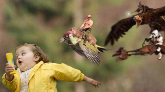 Comadreja montada en un pájaro carpintero