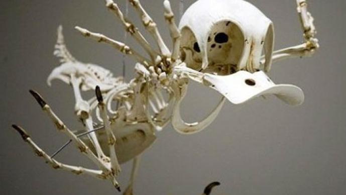Hyungkoo Lee, El Pato Donald, Coyote, dibujos animados, personajes, esqueleto, huesos