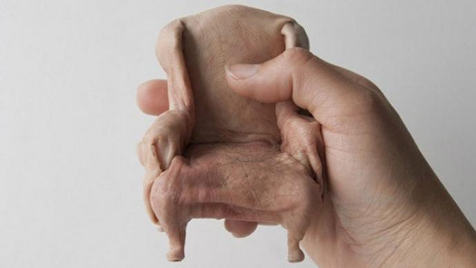 Muebles piel humana