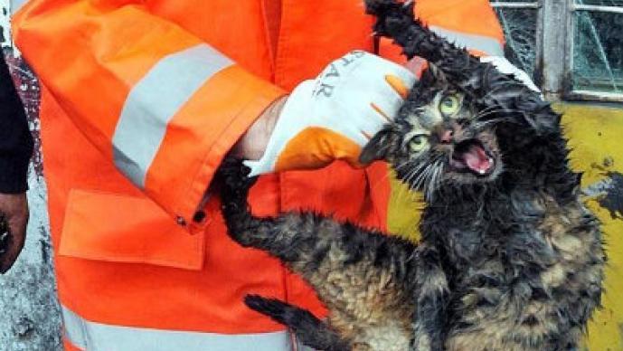 Gato atrapado en motor