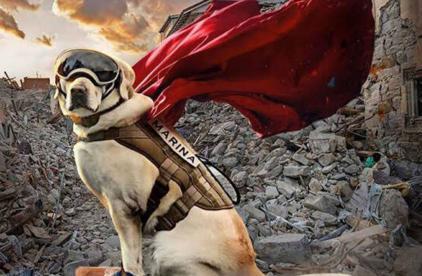 Frida mejores perros 2019