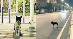 Captan a perrito esperando a su dueña fallecida en carretera de China. Noticias en tiempo real