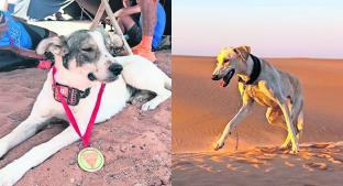 Perro corre maratón en pleno desierto, en Marruecos . Noticias en tiempo real