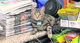 Gatos trabajan deshaciéndose de plagas molestas, en Nueva York. Noticias en tiempo real