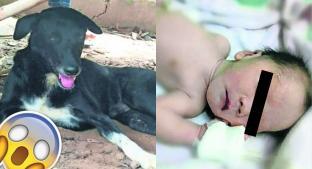 Mujer entierra vivo a recién nacido, pero perro lo encuentra y lo rescata. Noticias en tiempo real