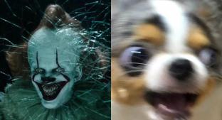 """Revelan nuevo trailer de """"It: Chapter Two"""" y los internautas quedan aterrorizados. Noticias en tiempo real"""