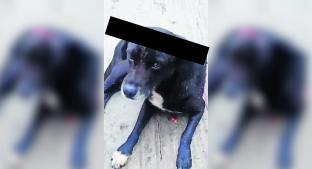 Mujer desalmada que macheteó a perrito podría pasar un año en la cárcel, en Morelos. Noticias en tiempo real