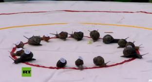 Emocionante carrera de caracoles le da la vuelta al mundo; la ganadora fue 'Sammy'. Noticias en tiempo real