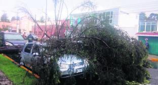 Caen ocho árboles por fuertes lluvias en Edomex; dos autos dañados . Noticias en tiempo real