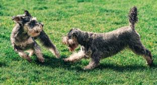 ¿Qué hago si mi perra está en celo y quiere hacer 'el delicioso' con mi pierna?. Noticias en tiempo real