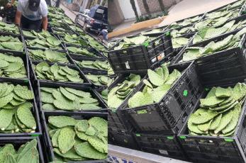 Decomisan 18 toneladas de nopal con valor de medio millón de pesos, en el Edomex