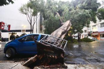 Tras fuerte lluvia, cae árbol sobre la parte trasera de un auto en la Cuauhtémoc