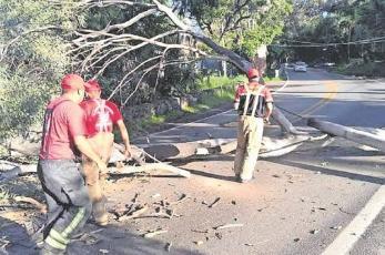 Protección Civil pide a la ciudadanía reportar árboles a punto de colapsar, en Morelos