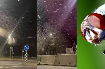 (VIDEO) Joven graba hermoso paisaje de nieve cayendo, pero eran miles de moscas teniendo sexo