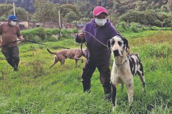 Albergue cuida a animalitos heridos en el deslave del Cerro del Chiquihuite