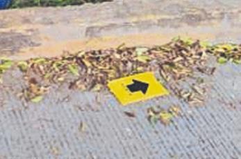 Motociclista muere tras pegarle a la banqueta y luego chocar contra árbol, en Morelos